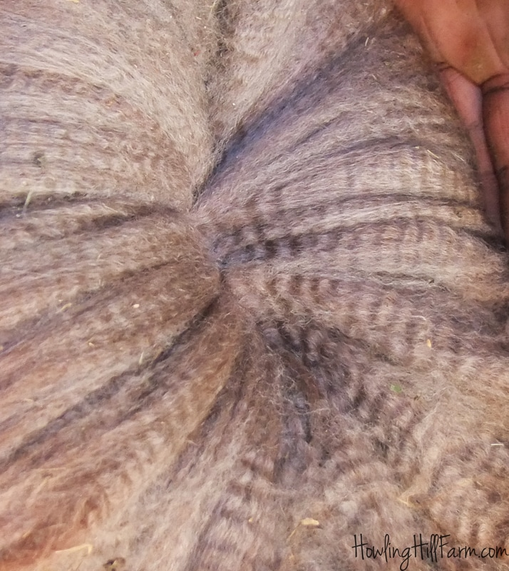 Rose Grey alpaca fleece